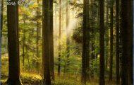 New Forest Travel_2.jpg