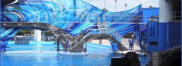SeaWorld Orlando Shows_10.jpg