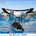 seaworld orlando shows 5 150x150 SeaWorld Orlando Shows