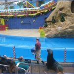 seaworld orlando shows 9 150x150 SeaWorld Orlando Shows
