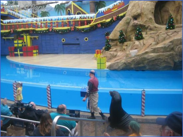 seaworld orlando shows 9 SeaWorld Orlando Shows