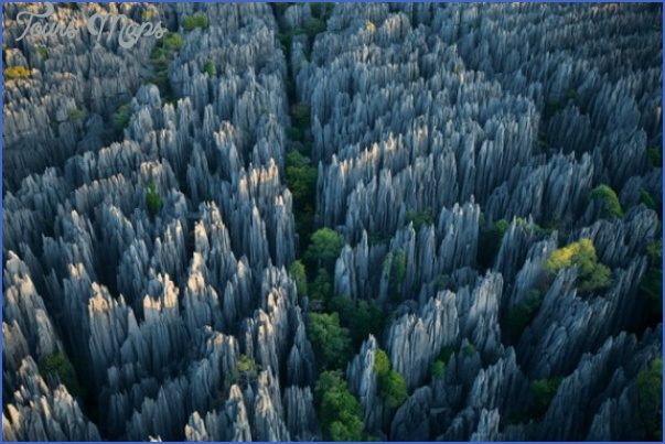 the stone forest china 3 The Stone Forest China