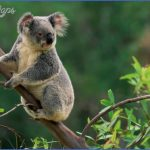 top wildlife travel destinations  0 150x150 Top Wildlife Travel Destinations