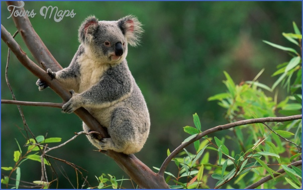 top wildlife travel destinations  0 Top Wildlife Travel Destinations