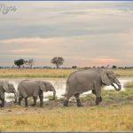 top wildlife travel destinations  1 150x150 Top Wildlife Travel Destinations