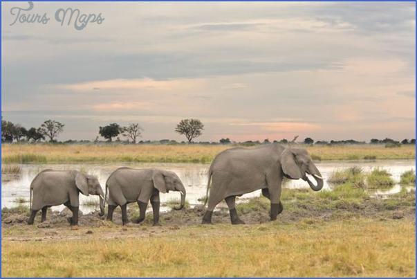 top wildlife travel destinations  1 Top Wildlife Travel Destinations