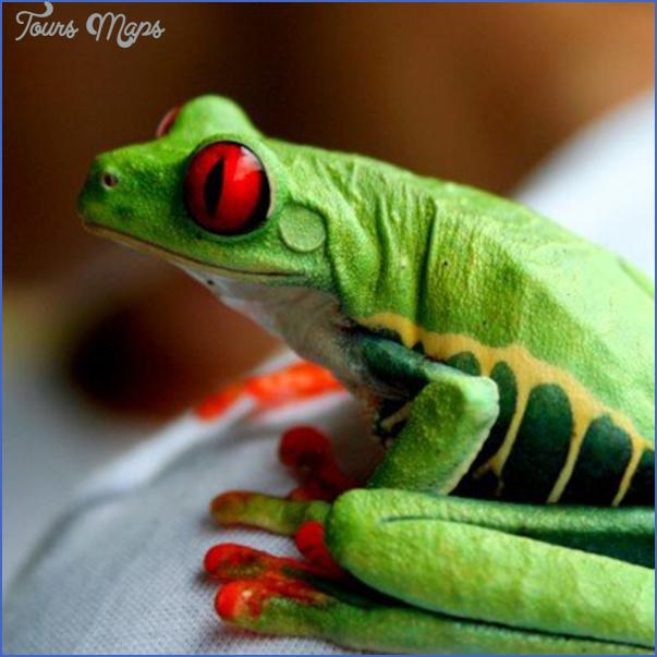 top wildlife travel destinations  13 Top Wildlife Travel Destinations