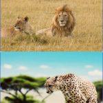 top wildlife travel destinations  4 150x150 Top Wildlife Travel Destinations