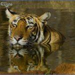 top wildlife travel destinations  7 150x150 Top Wildlife Travel Destinations