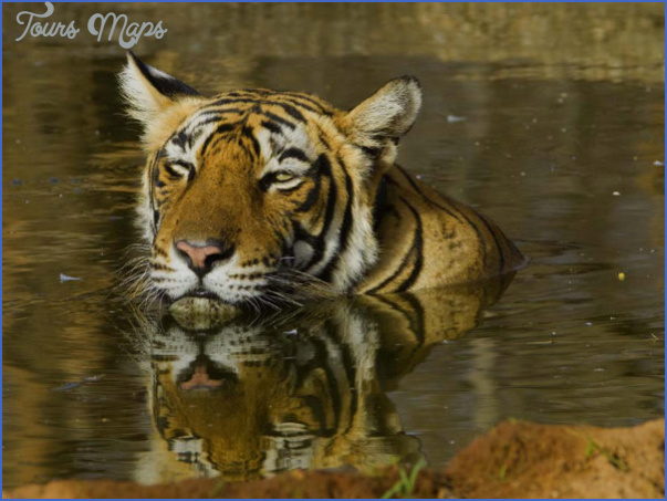top wildlife travel destinations  7 Top Wildlife Travel Destinations