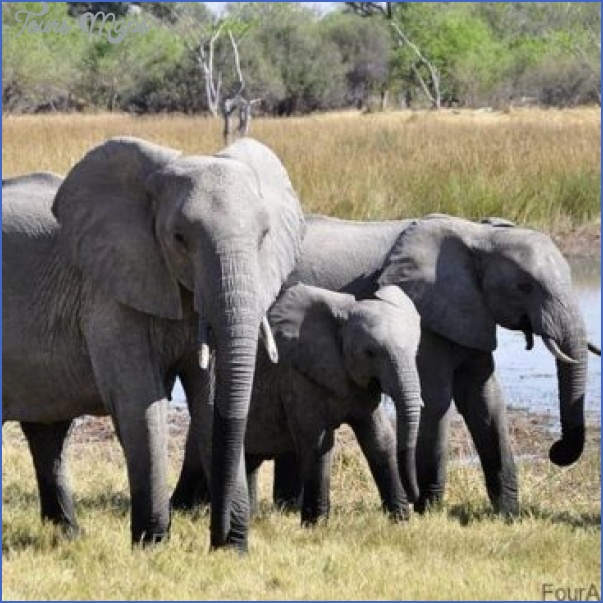 top wildlife travel destinations  9 Top Wildlife Travel Destinations