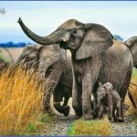 wildlife and wilderness travel  21 150x150 Wildlife And Wilderness Travel