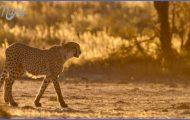 Wildlife Travel Guide _13.jpg