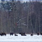 Wildlife Travel To Bialowieza_10.jpg