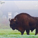 Wildlife Travel To Bialowieza_3.jpg