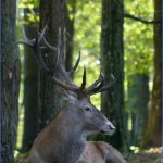 Wildlife Travel To Bialowieza_5.jpg