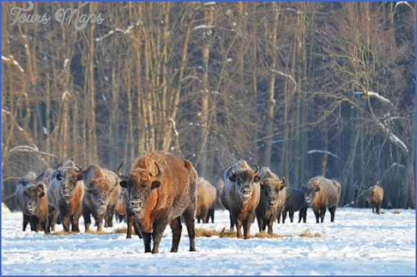 Wildlife Travel To Bialowieza_7.jpg