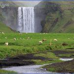 wildlife travel to iceland 11 150x150 Wildlife Travel To Iceland