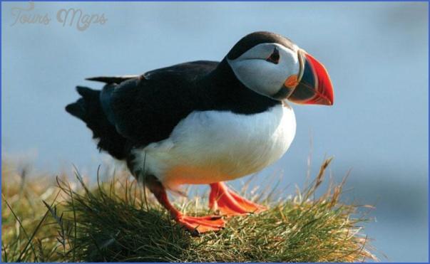 wildlife travel to iceland 9 Wildlife Travel To Iceland