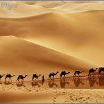Wildlife Travel To Rub'al-Khali_0.jpg