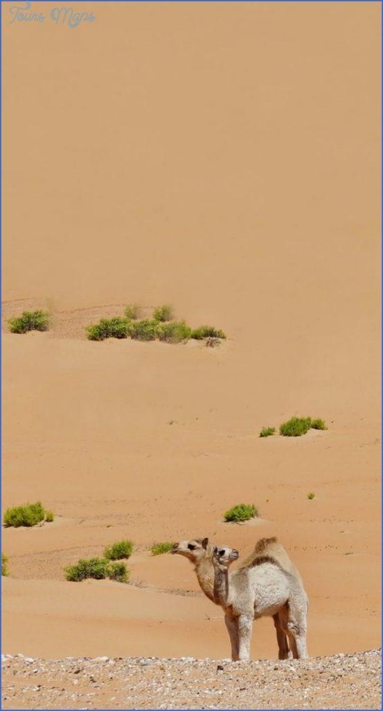 Wildlife Travel To Rub'al-Khali_5.jpg