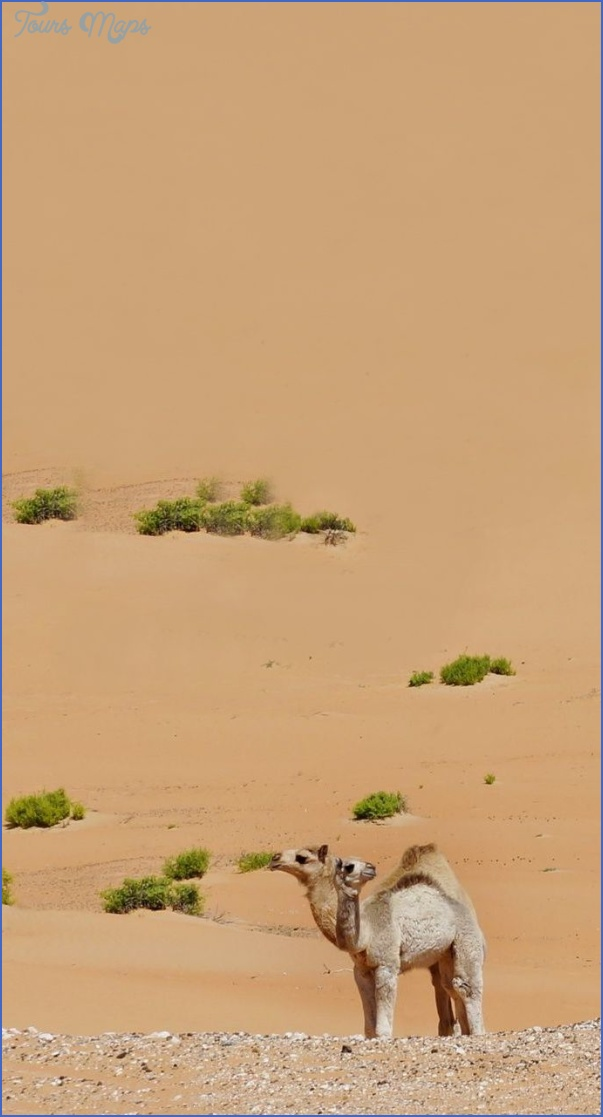 wildlife travel to rubal khali 5 Wildlife Travel To Rub'al Khali