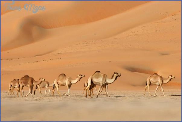 Wildlife Travel To Rub'al-Khali_6.jpg