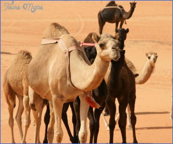 Wildlife Travel To Rub'al-Khali_7.jpg