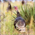 wildlife travel to turkey 12 150x150 Wildlife Travel To Turkey