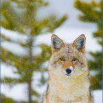 wildlife travel to us 15 150x150 Wildlife Travel To US