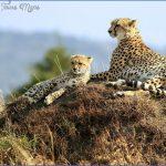 wildlife travel to us 2 150x150 Wildlife Travel To US