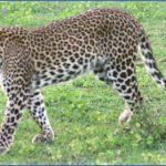 wildlife worldwide travel  1 150x150 Wildlife Worldwide Travel