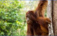 Wildlife Worldwide Travel _2.jpg