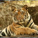 world wildlife travel tours  14 150x150 World Wildlife Travel Tours