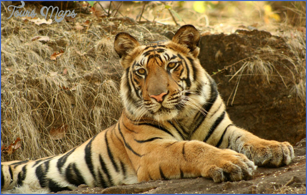 world wildlife travel tours  14 World Wildlife Travel Tours