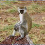world wildlife travel tours  19 150x150 World Wildlife Travel Tours