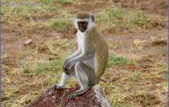 World Wildlife Travel Tours _19.jpg