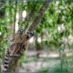 world wildlife travel tours  4 150x150 World Wildlife Travel Tours