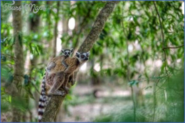 world wildlife travel tours  4 World Wildlife Travel Tours