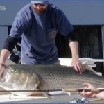 canal bait and tackle fishing report 0 150x150 Canal Bait And Tackle Fishing Report