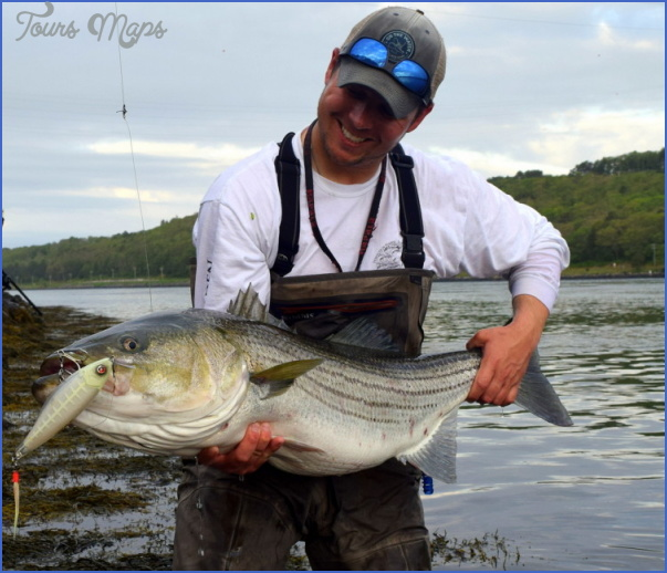 Canal bait and tackle fishing report for Striper fishing bait