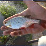 canal fishing uk 0 150x150 Canal Fishing Uk