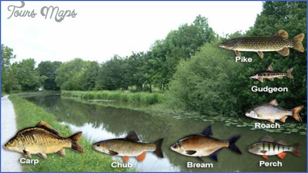 canal fishing uk 1 Canal Fishing Uk