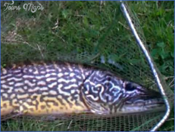canal fishing uk 19 Canal Fishing Uk