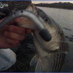 cape cod canal striper fishing 0 150x150 Cape Cod Canal Striper Fishing
