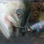 cape cod canal striper fishing 2 150x150 Cape Cod Canal Striper Fishing