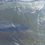 delta mendota canal fishing 18 150x150 Delta Mendota Canal Fishing