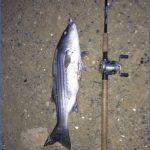 delta mendota canal fishing 2 150x150 Delta Mendota Canal Fishing