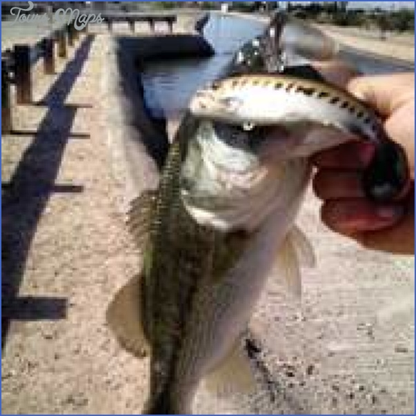 arizona canal fishing 12 Arizona Canal Fishing