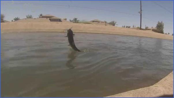 arizona canal fishing 5 Arizona Canal Fishing